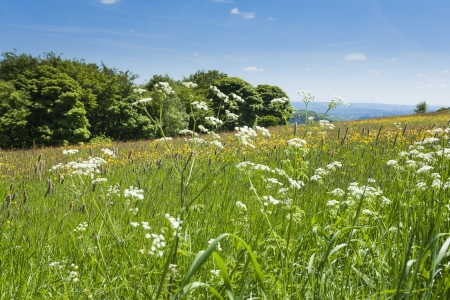 Yorkshire Landscape with wild flowers in meadow Stock Photo