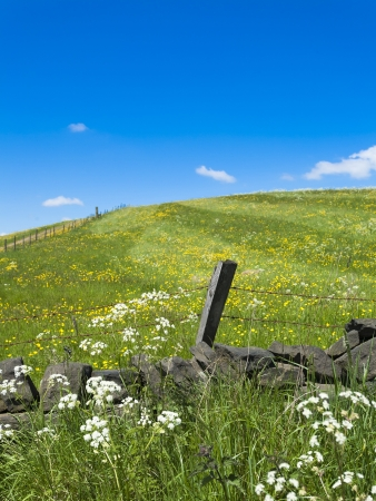 Grassy Yorkshire hillside with wild flowers, fence and wall Stock Photo