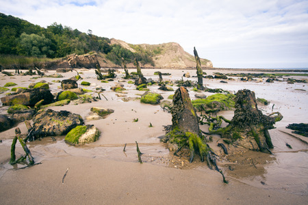 Decaying Tree stumps and rocks on beach at Cayton Bay, Scarborough, North Yorkshire