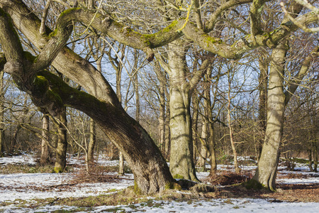 wooded path: Winter Trees in Frozen Barren Landscape for textures, sillhouettes and backgrounds