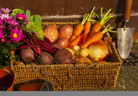 Organic gardening growing vegetables and flowers on the allotment for healthy eating and country living Standard-Bild