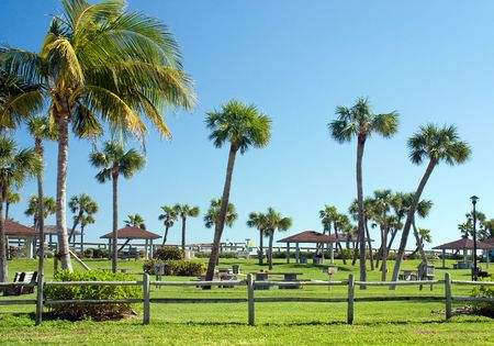 Palm tree lined park in the warm Florida sunshine. A beach access point, though not visible in image. Stock Photo