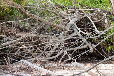 underbrush: Wind damaged brush whitewashed by the elements