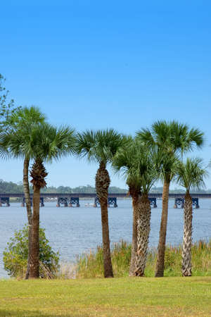 Palm tree lined riverbank with railroad bridge backdrop