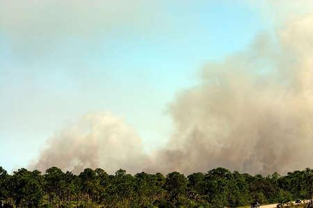 forest fire: Humo de alta en el cielo de la Florida de incendios forestales  Foto de archivo