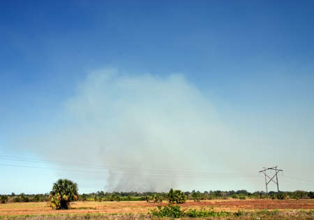 Florida wildfire burning in the distance. Focus on smoke; foreground not sharply focused.
