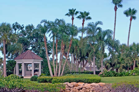 Landscaped yard with gazebo and palm trees