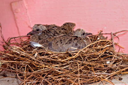 Pair of  bird chicks sitting in nest