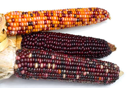Three ears of Indian Corn shot over white photo