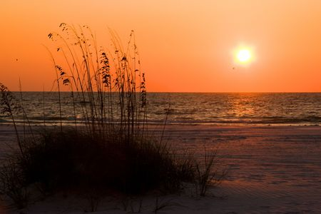 Sunset over Florida Gulf Coast beach with Sea Oats(Natures erosion defense) in foreground