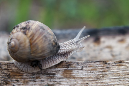 Close up of snail walking the plank