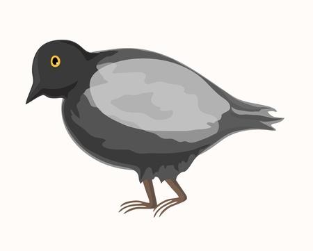 despondent: Grey pigeon   Illustration