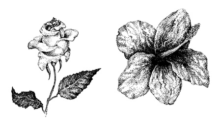 Flowers in ink pen dotted style  Eps 10 Stock Photo