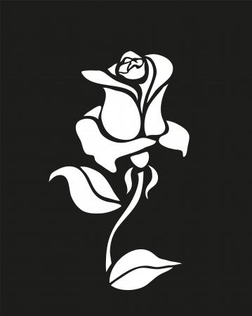 White contrast rose on black background  Eps 10 Stock Photo