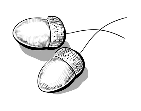 performed: monochrome illustration of acorn. Hatching performed on graphic tablet