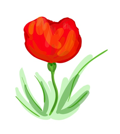 colorful vector illustration of red poppy Vector