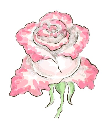 Decorative rose of two colours drawn by hand on graphic tablet. Monochrome hatching and colorful transparent strokes,