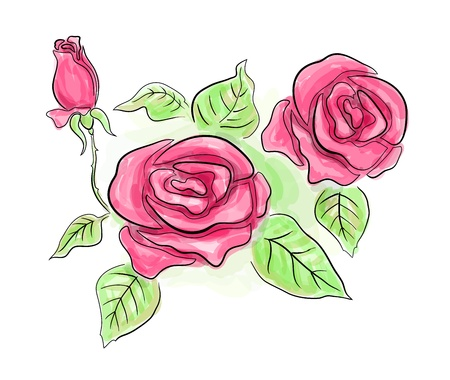 Sketch of beautiful pink roses in transparent colors