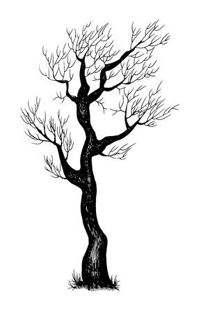 rinds: illustration of hand drawn tree Illustration