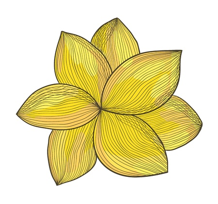 picturesque: illustration of a yellow flower. Ink pen and watercolor style.