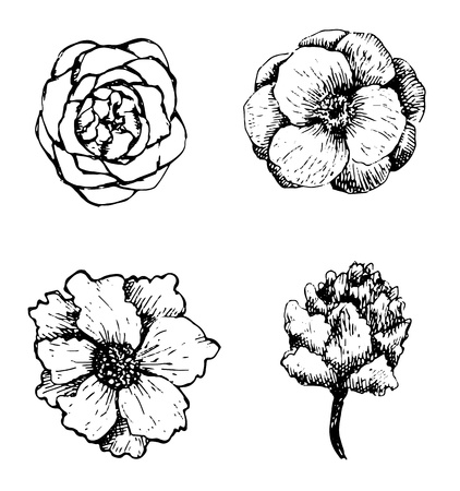 gravure: Set of hand drawn flowers.