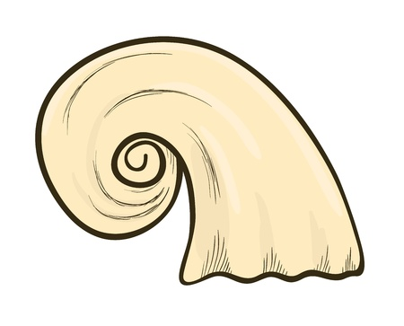 sketch of cockleshell Vector