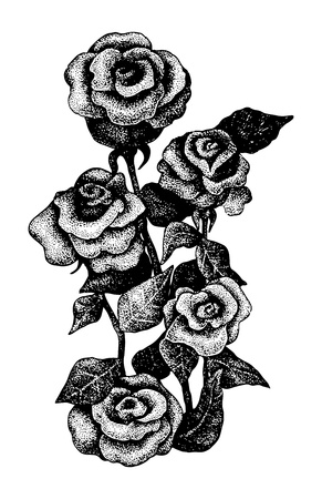 gravure: Black and white dotted hand drawn illustration of five roses Illustration