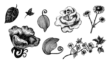 pointillism: Collection of hand drawn ink flowers and leaves.