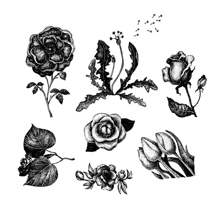 Collection of vintage hand drawn flowers Illustration