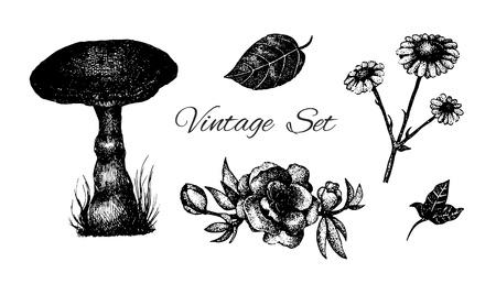 set of vintage etching flowers, leaves and mushroom  Vector