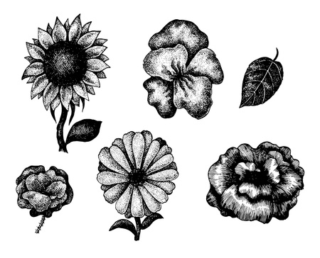 Collection of black and white hand drawn flowers.  Illustration