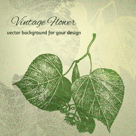 Lime tree bladeren. Hand getrokken illustratie Vector Illustratie