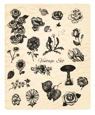 Big set of vintage hand drawn vector flowers on textured background for your design Vector