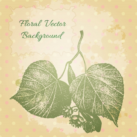 gravure: Vector vintage background with a beautiful hand drawn lime tree blossom and leaves.