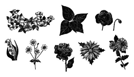 Vector set of hand drawn ink vintage flowers Vector