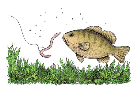 Fishing illustration illustration