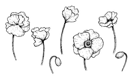 Set of vector black and white poppies Illustration