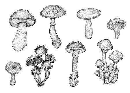 food poison: Collection of black and white hand drawn mushrooms. Vector illustration.