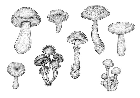 Collection of black and white hand drawn mushrooms. Raster illustration.