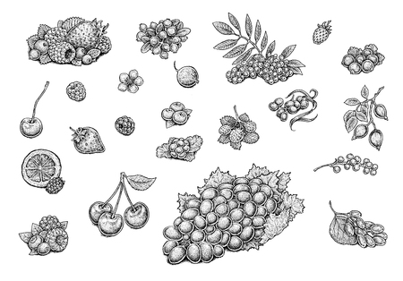 Berries collection: strawberry, raspberry, cherry, grapes, blueberry, ashberry (rowanberry), cloudberry, cowberry (red whortleberry, lingonberry), gooseberry, hips and various compositions of berries.  Set of hand drawn illustrations of excellent quality