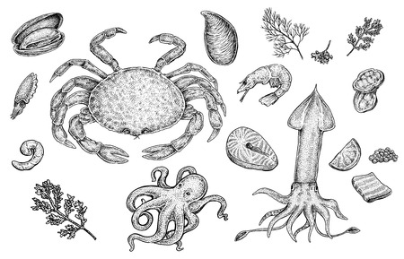 Seafood collection: mussel, crab, squid, shrimp, caviar, octopus, fish and other.  Set of hand drawn black and white sketchy illustrations of excellent quality and detalization. Raster format.