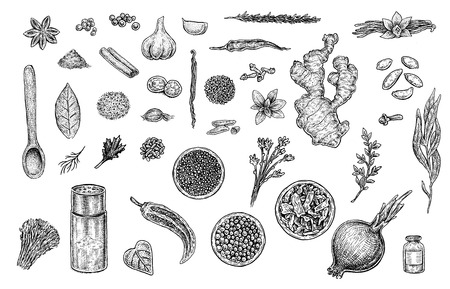 Herbs & spices collection: cinnamon, cloves, salt jar, pepper, paprika, garlic, vanilla, dill, mint, parsley, ginger, onion, sage, nutmeg, bay leaf and others.
