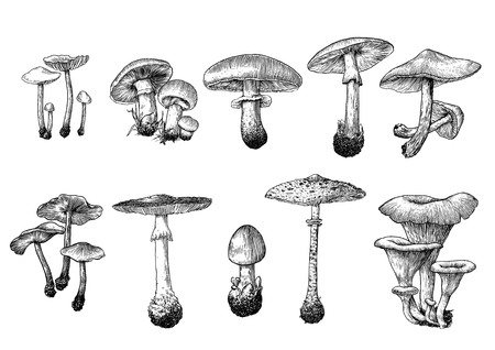 mushrooms illustration Vettoriali