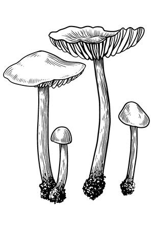 Mushroom, vector, drawing, engraving, illustration, small, family, group, tiny