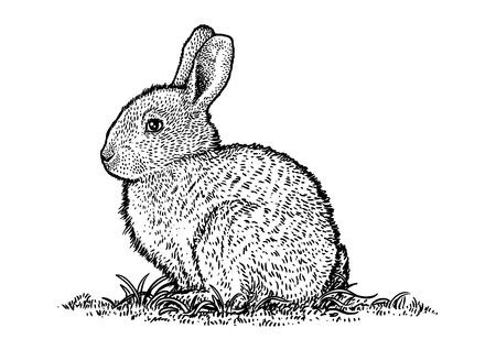 Lapin, illustration lapin, pâques, dessin, gravure, l'art de la ligne