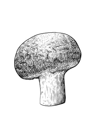 mycology: Champignon mushroom illustration, drawing, engraving, line art