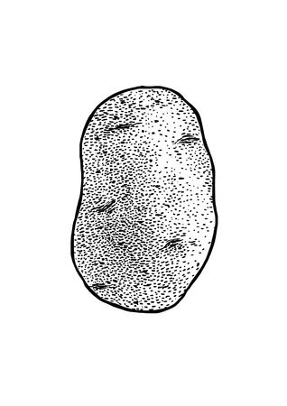 Potato illustration, drawing, engraving, line art, vegetable, vector