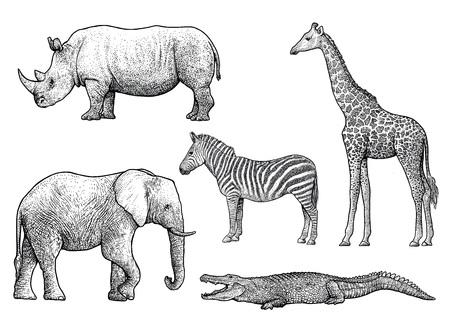 アフリカの動物イラスト、ドローイング、彫刻、インク、ライン アート、ベクトル