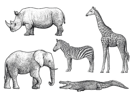 African animals illustration, drawing, engraving, ink, line art, vector Ilustração