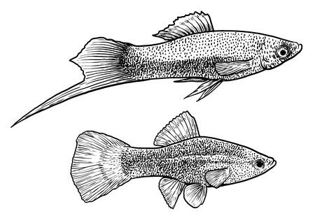 Swordtail fish illustration, drawing, engraving, ink, line art, vector
